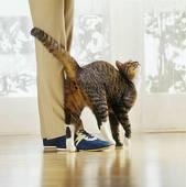 cat rubbing leg