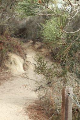 Torrey Pines (Photo Credit: Sirpa Ikonen)
