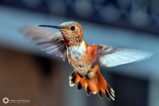 """Flying Toffee"" (Photo Credit: Timo Saarelma)"