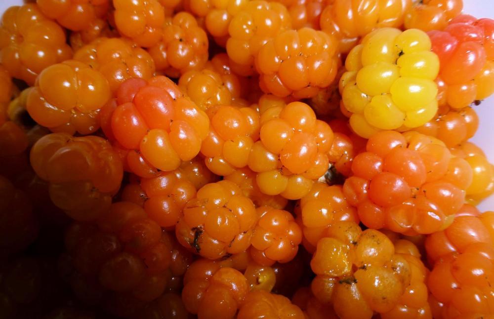 Cloudberries (Photo Credit: Kati Nykänen)