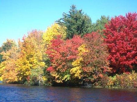 fall-foliage-560